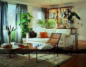 家居风水布置之客厅植物摆放风水