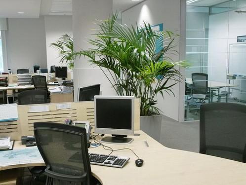 秘籍:办公室植物摆放与风水的关系