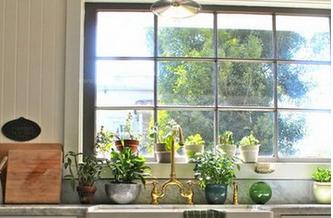 风水知识2016家居风水;植物的开运与禁忌