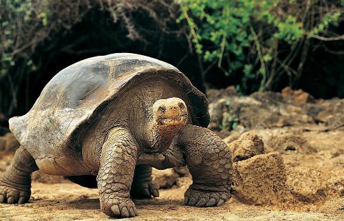 家居养龟改善风水关系