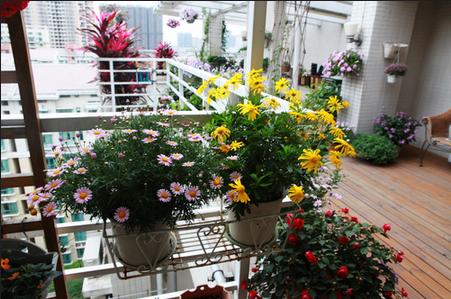 阳台养花草的风水讲究
