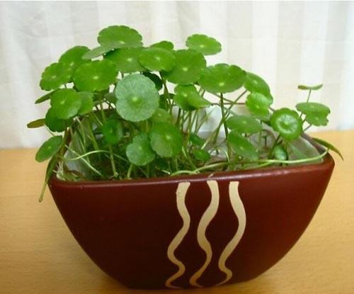 通过植物风水提升财运