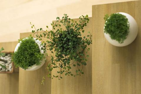 办公室摆放五行植物有讲究