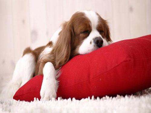 风水知识有什么办法可以让你睡出风水宝地
