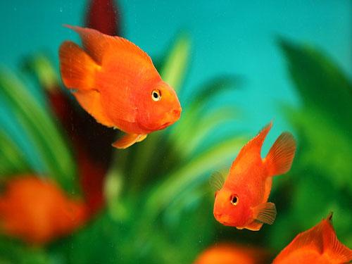 风水上养鱼最好养多少条